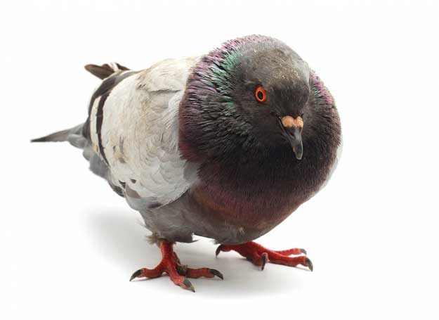 the-pigeon-drop-scam
